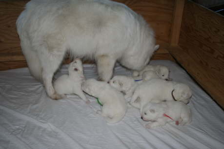 Ayla always makes sure, that all the babies are doing well.