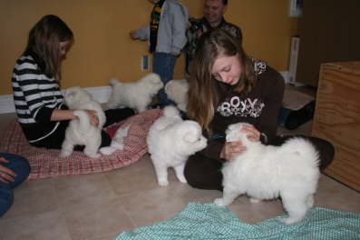 31th - The puppies meet a future puppy family.