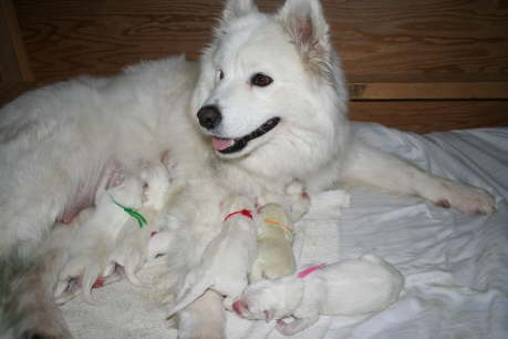 Ayla and her 7 babies 1st day