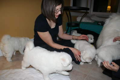 Kirsten surrounded by the puppies