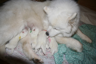 Puppy Birth Dec