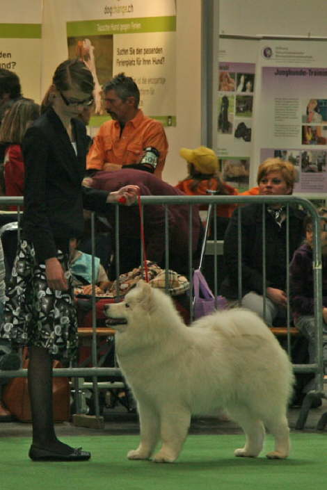Beryll LOVES dog show. Hardly surprising, since she always is the center of attention and leaves the show with great winnings and nice prizes.